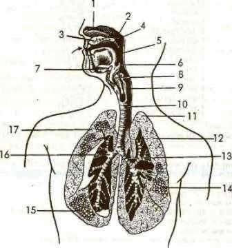 Схемы анатомического строения